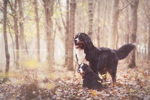 Pets - Amici 4 zampe